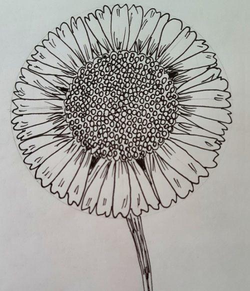 virág rajz