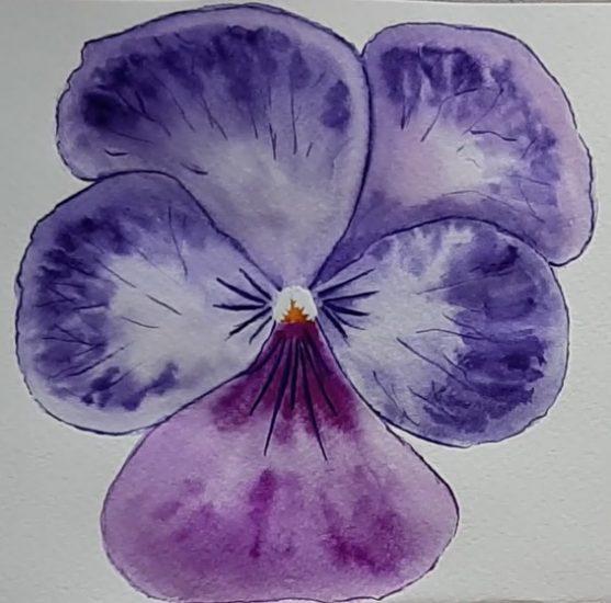 Árvácska akvarellel festve