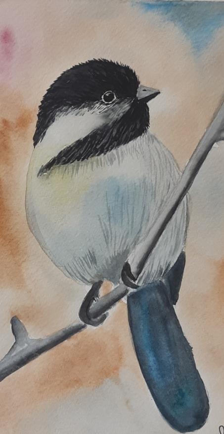 széncinege akvarell