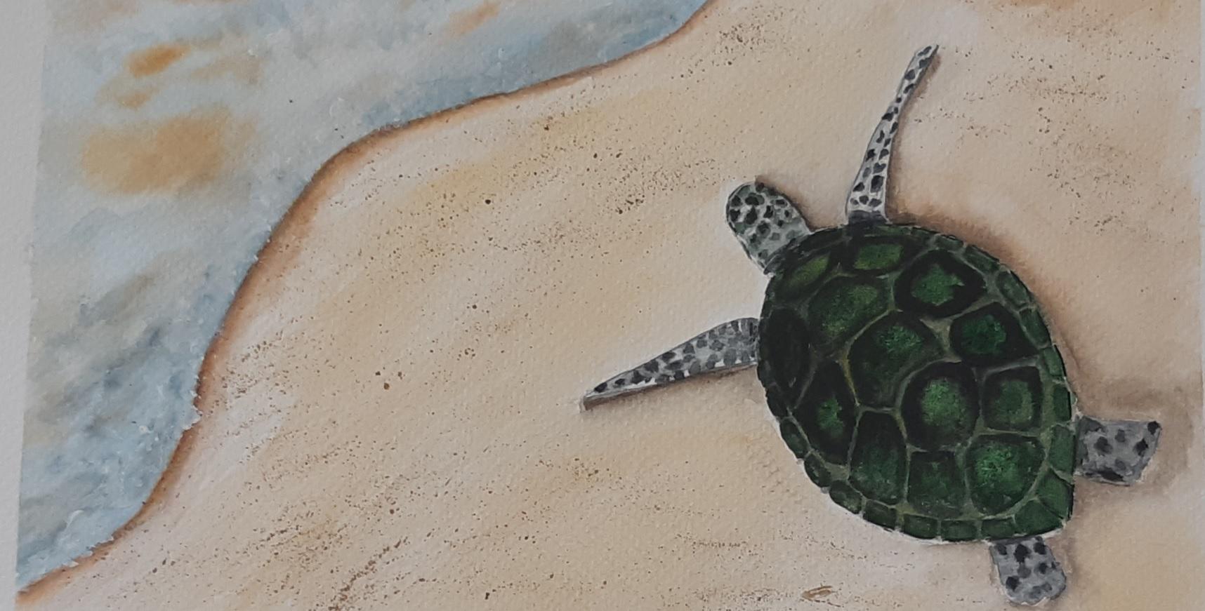 tengerparti teknős akvarell