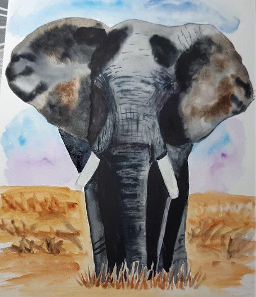 Elefánt akvarellel festve